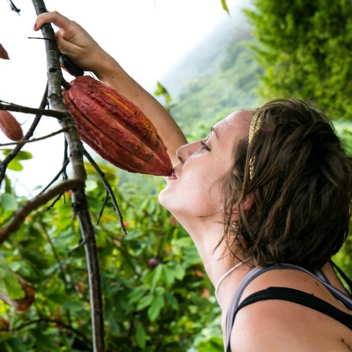 Kissing the cocoa on the Grenada Hash run