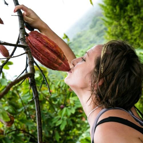 Kissing the cocoa on the Grenada Hash run